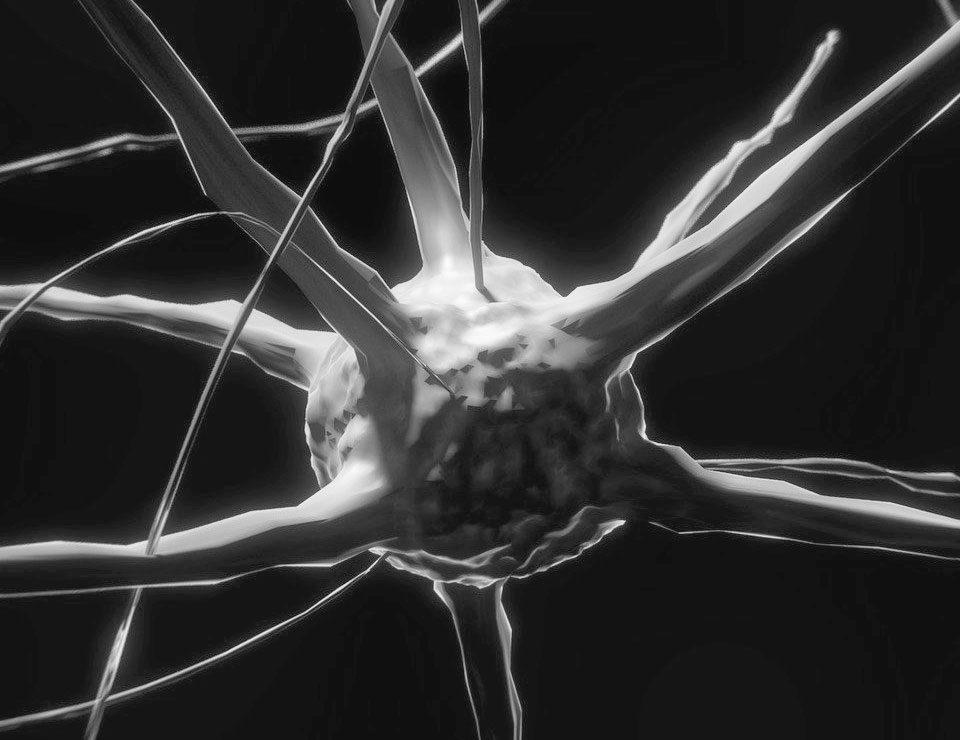 baner do artykuło mindfulness - neurony