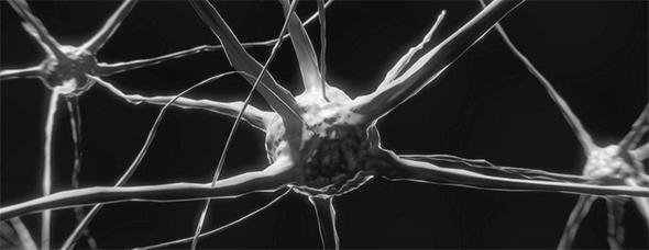 synapsa Mindfullnes